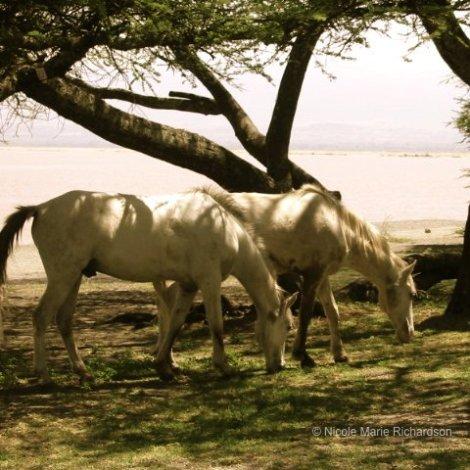 Langano Lake