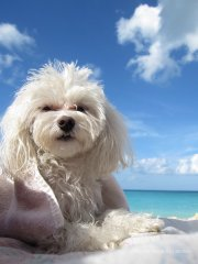 Bella in the Bahamas
