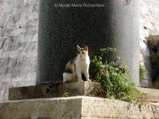 Cemitero cats