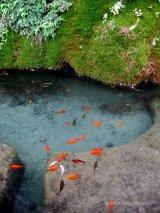 Foro Romano fountain