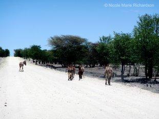 Namibian traffic