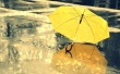 yellow-umbrella-rain-2560x1600